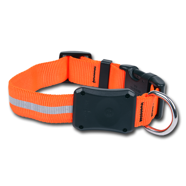 Nite-Ize Dawg LED Hunde-Halsband Orange im Pareyshop