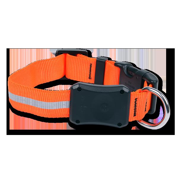 Nite-Ize Dawg LED Hunde-Halsband Orange im Pareyshop