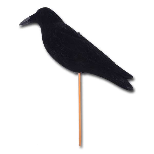 Lockvogel Krähe sitzend (50 cm) im Pareyshop
