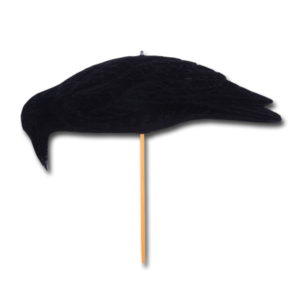Lockvogel Krähe pickend (50 cm) im Pareyshop