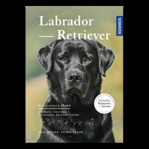 Labrador Retriever im Pareyshop