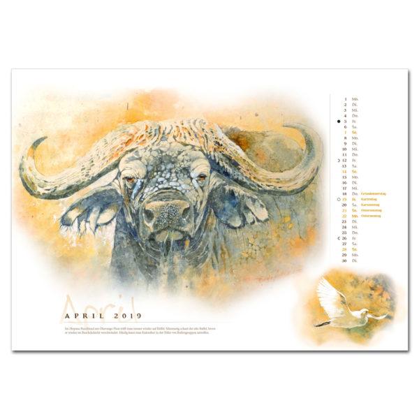 Bodo Meier Kalender 2019 im Pareyshop