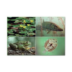 Heintges Lernkarten Fisch im Pareyshop