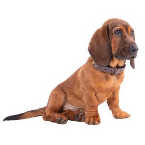 AKAH Biothane-Hundehalsung Braun im Pareyshop