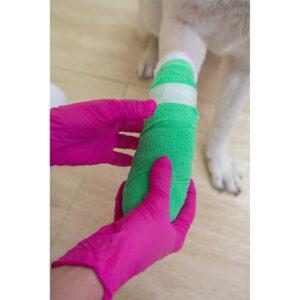 Erste Hilfe am Hund im Pareyshop
