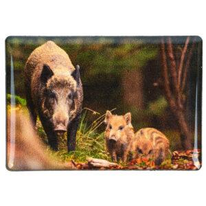 Foto-Magnet Wildschwein im Pareyshop